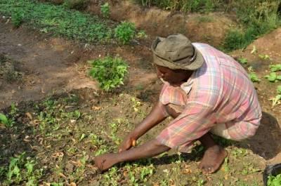 13.06.2013: Neue Perspektiven für die afrikanische Landwirtschaft? Die EU reformiert ihre Agrarpolitik, Bewrlin