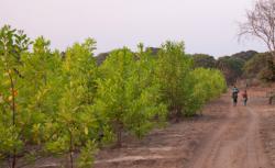 19.-21.10.2018: Auf dem Holzweg?! Forstplantagen und ihre Auswirkungen in Mosambik, Berlin